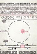 6: Bewegungssehen durch Amakrinzellen