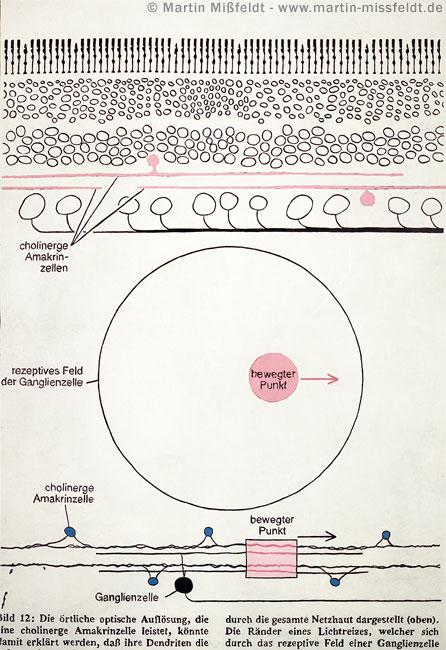 Bewegungssehen durch Amakrinzellen