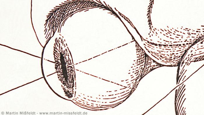 Querschnitt des Auges
