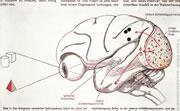 Auge und Gehirn - 1993, Öl auf Leinwand, 130 x 200 cm