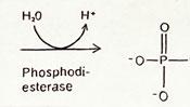 Phosphodiesterase