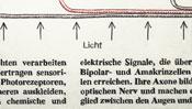 Licht (schematische Darstellung)
