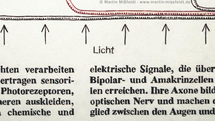 Licht (schematische Darstellung) (aus: Netzhaut Schichten)