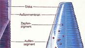Zapfenpigment - Disks