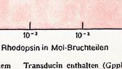 Rhodopsin in mol-Bruchteilen - gemalte Ölfarbe