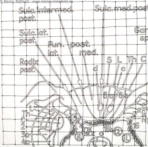 Neuro Zeichnung