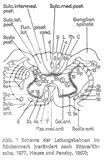 Leitung im Rückenmark
